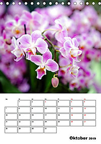 Orchideen - Tropische Schönheiten (Tischkalender 2019 DIN A5 hoch) - Produktdetailbild 10