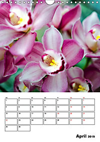 Orchideen - Tropische Schönheiten (Wandkalender 2019 DIN A4 hoch) - Produktdetailbild 4
