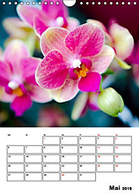 Orchideen - Tropische Schönheiten (Wandkalender 2019 DIN A4 hoch) - Produktdetailbild 5