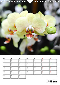 Orchideen - Tropische Schönheiten (Wandkalender 2019 DIN A4 hoch) - Produktdetailbild 7