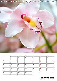 Orchideen - Tropische Schönheiten (Wandkalender 2019 DIN A4 hoch) - Produktdetailbild 1