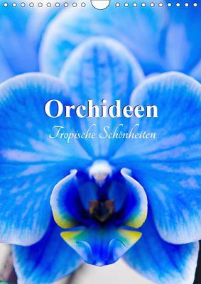 Orchideen - Tropische Schönheiten (Wandkalender 2019 DIN A4 hoch), Nina Schwarze