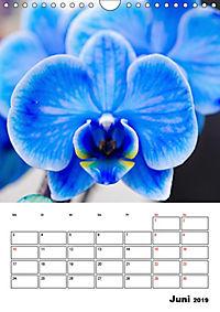 Orchideen - Tropische Schönheiten (Wandkalender 2019 DIN A4 hoch) - Produktdetailbild 6