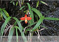 Orchideenland Ecuador (Wandkalender 2019 DIN A2 quer) - Produktdetailbild 3