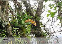 Orchideenland Ecuador (Wandkalender 2019 DIN A2 quer) - Produktdetailbild 4