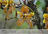 Orchideenland Ecuador (Wandkalender 2019 DIN A2 quer) - Produktdetailbild 7