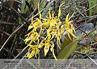 Orchideenland Ecuador (Wandkalender 2019 DIN A2 quer) - Produktdetailbild 9