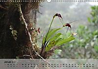 Orchideenland Ecuador (Wandkalender 2019 DIN A3 quer) - Produktdetailbild 1