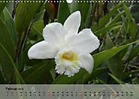 Orchideenland Ecuador (Wandkalender 2019 DIN A3 quer) - Produktdetailbild 2