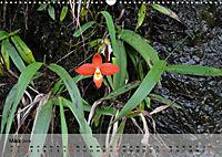 Orchideenland Ecuador (Wandkalender 2019 DIN A3 quer) - Produktdetailbild 3