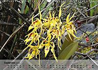 Orchideenland Ecuador (Wandkalender 2019 DIN A3 quer) - Produktdetailbild 9