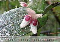 Orchideenland Ecuador (Wandkalender 2019 DIN A3 quer) - Produktdetailbild 11
