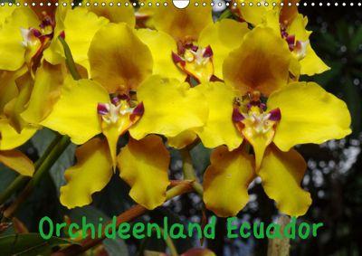 Orchideenland Ecuador (Wandkalender 2019 DIN A3 quer), Klaus Kettler