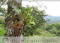 Orchideenland Ecuador (Wandkalender 2019 DIN A3 quer) - Produktdetailbild 6