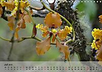 Orchideenland Ecuador (Wandkalender 2019 DIN A4 quer) - Produktdetailbild 7