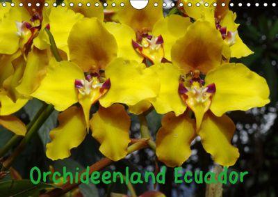 Orchideenland Ecuador (Wandkalender 2019 DIN A4 quer), Klaus Kettler