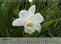 Orchideenland Ecuador (Wandkalender 2019 DIN A4 quer) - Produktdetailbild 2