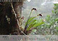 Orchideenland Ecuador (Wandkalender 2019 DIN A4 quer) - Produktdetailbild 1