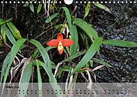 Orchideenland Ecuador (Wandkalender 2019 DIN A4 quer) - Produktdetailbild 3