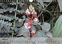 Orchideenland Ecuador (Wandkalender 2019 DIN A4 quer) - Produktdetailbild 5