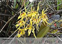 Orchideenland Ecuador (Wandkalender 2019 DIN A4 quer) - Produktdetailbild 9