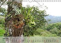 Orchideenland Ecuador (Wandkalender 2019 DIN A4 quer) - Produktdetailbild 6