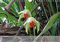 Orchideenland Ecuador (Wandkalender 2019 DIN A4 quer) - Produktdetailbild 12