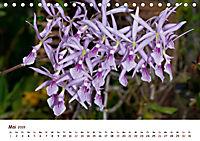 Orchideenzauber (Tischkalender 2019 DIN A5 quer) - Produktdetailbild 5