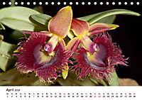 Orchideenzauber (Tischkalender 2019 DIN A5 quer) - Produktdetailbild 4