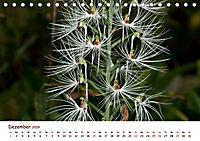 Orchideenzauber (Tischkalender 2019 DIN A5 quer) - Produktdetailbild 12