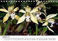 Orchideenzauber (Tischkalender 2019 DIN A5 quer) - Produktdetailbild 1