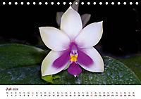 Orchideenzauber (Tischkalender 2019 DIN A5 quer) - Produktdetailbild 7