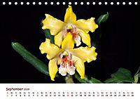 Orchideenzauber (Tischkalender 2019 DIN A5 quer) - Produktdetailbild 9