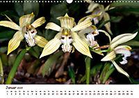Orchideenzauber (Wandkalender 2019 DIN A3 quer) - Produktdetailbild 11