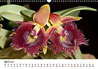 Orchideenzauber (Wandkalender 2019 DIN A3 quer) - Produktdetailbild 4