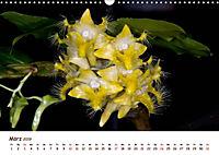 Orchideenzauber (Wandkalender 2019 DIN A3 quer) - Produktdetailbild 3
