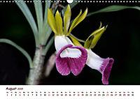 Orchideenzauber (Wandkalender 2019 DIN A3 quer) - Produktdetailbild 8