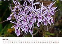 Orchideenzauber (Wandkalender 2019 DIN A3 quer) - Produktdetailbild 5
