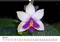 Orchideenzauber (Wandkalender 2019 DIN A3 quer) - Produktdetailbild 7