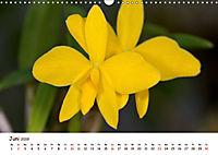 Orchideenzauber (Wandkalender 2019 DIN A3 quer) - Produktdetailbild 6