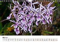 Orchideenzauber (Wandkalender 2019 DIN A4 quer) - Produktdetailbild 5