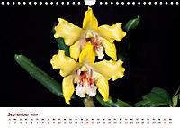 Orchideenzauber (Wandkalender 2019 DIN A4 quer) - Produktdetailbild 9