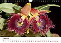Orchideenzauber (Wandkalender 2019 DIN A4 quer) - Produktdetailbild 4