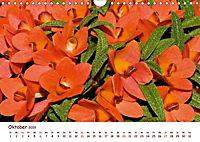 Orchideenzauber (Wandkalender 2019 DIN A4 quer) - Produktdetailbild 10