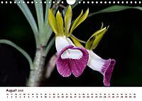 Orchideenzauber (Wandkalender 2019 DIN A4 quer) - Produktdetailbild 8