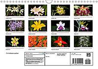 Orchideenzauber (Wandkalender 2019 DIN A4 quer) - Produktdetailbild 13