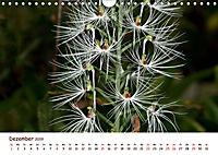 Orchideenzauber (Wandkalender 2019 DIN A4 quer) - Produktdetailbild 12