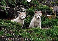 Ost-Grönland (Wandkalender 2019 DIN A4 quer) - Produktdetailbild 5