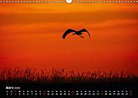 Ostseeregion Darß-Zingst (Wandkalender 2019 DIN A3 quer) - Produktdetailbild 3