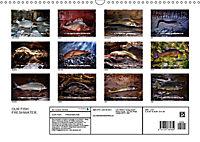 OUR FISH. FRESHWATER. (Wall Calendar 2019 DIN A3 Landscape) - Produktdetailbild 13